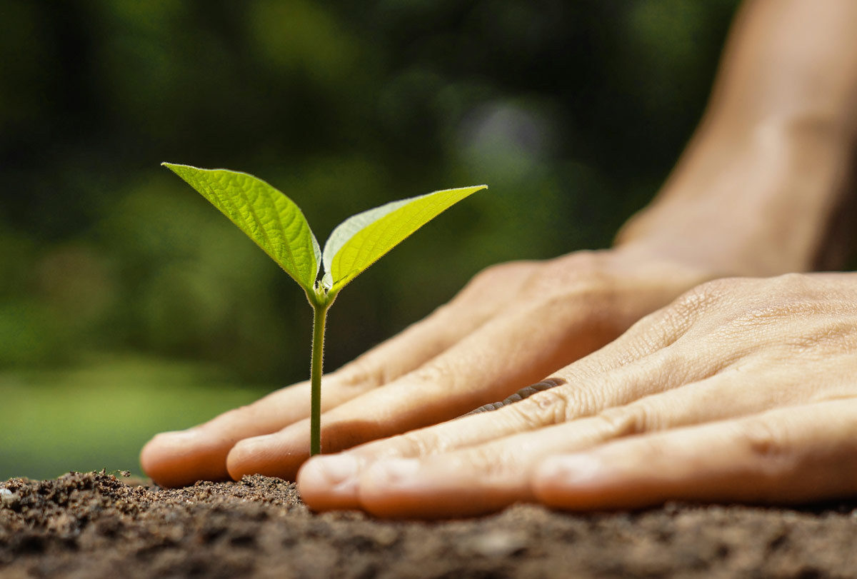 Photo of person planting seedling by weerapatkiatdumrong via iStockPhoto