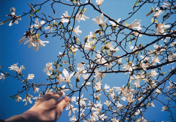 Photo of hand reaching up to touch tree with flowers by Risa Ikeda via Flickr
