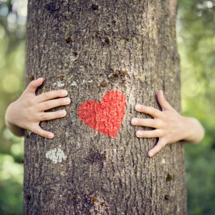 Person Hugging A Tree And Having Gratitude For Nature