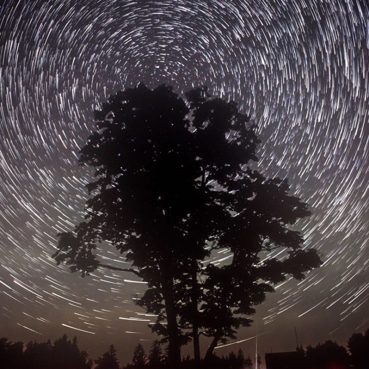 Star Tree Photo By  Jessie  Hodge Via  Flickr