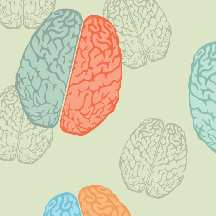 Pastel illustrations of brain anatomy by Yuliya_Lesovaya via iStockPhoto