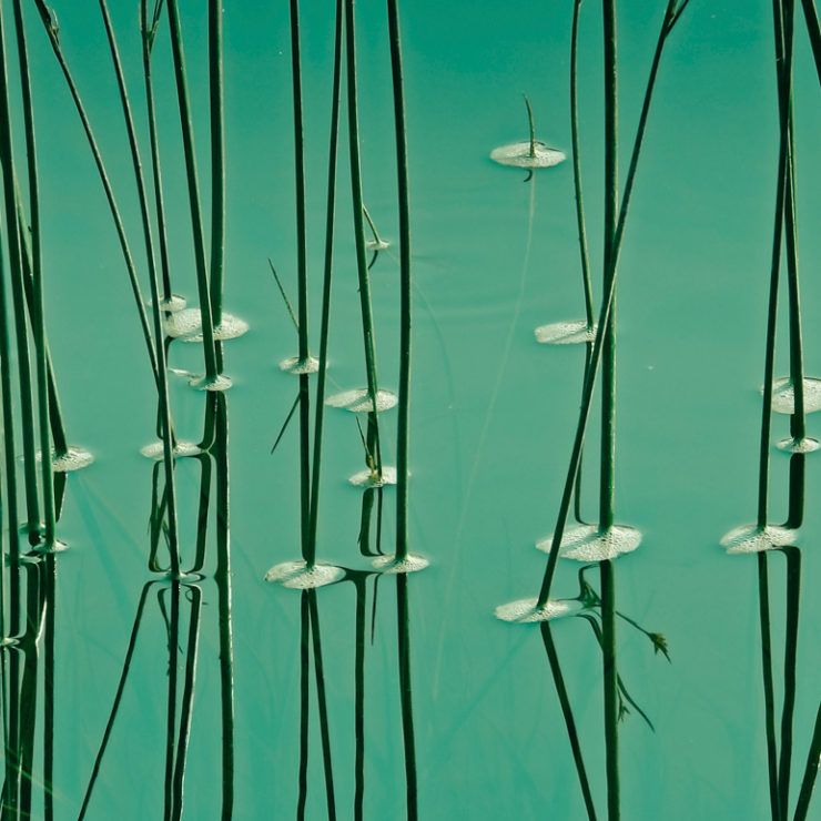 Photo of grass growing in green water to reflect peace and calmness