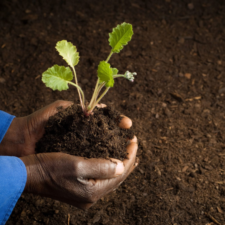 "African American farmer holding a plant. Image symbolizing that humility has the root word ""humus,""  meaning earth in Latin."