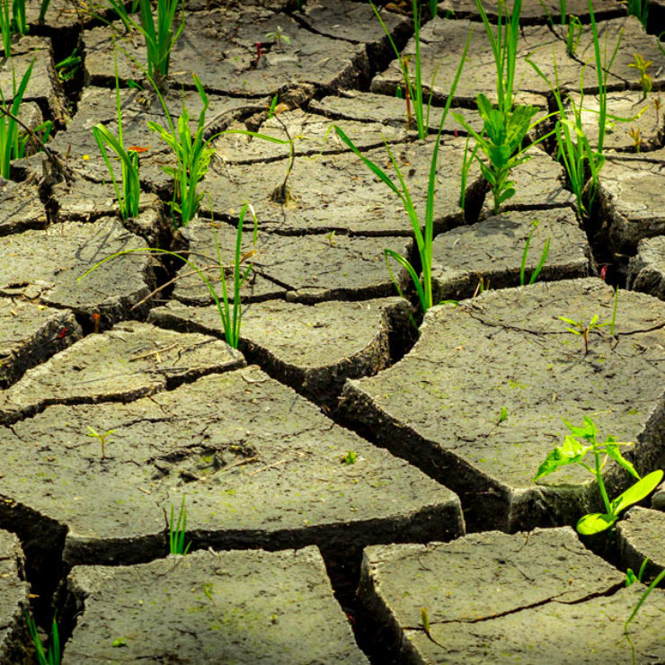 Grass Growing In Dry Cracked Earth to show the negative effects of climate change
