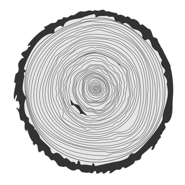 Tree ring illustration by whilerests via iStockPhoto