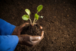 """African American farmer holding a plant. Image symbolizing that humility has the root word """"humus,""""  meaning earth in Latin."""