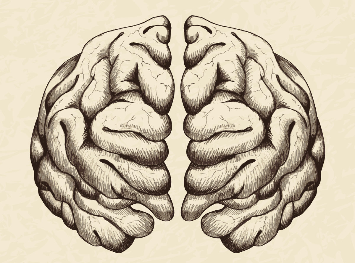 Anatomical brain illustration by rudall30 via iStock