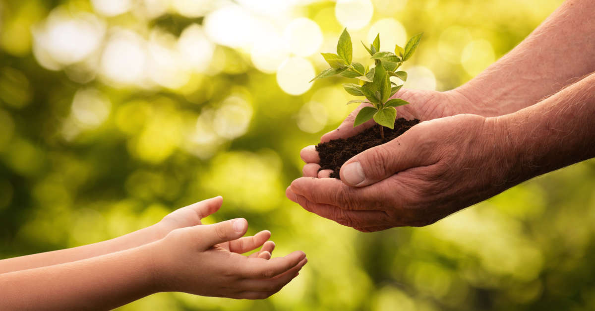 Older-person-givingplant-to-child.jpg#as