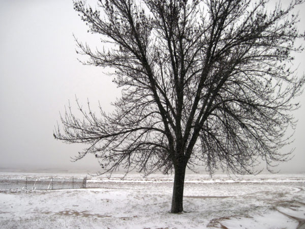 Photo of tree with no leaves in winter by Renee Mcgurk via Flickr